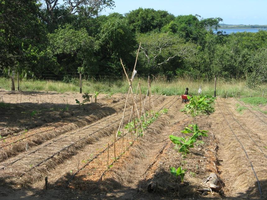Test garden Agroforestry