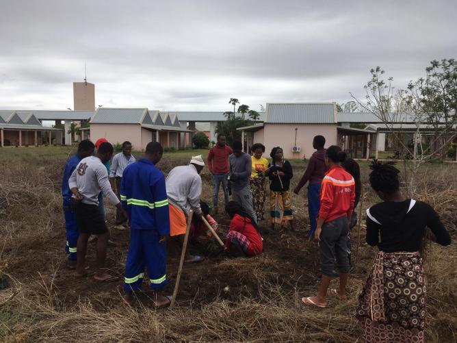 Planting tree circles