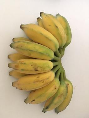 Bananen van eigen aanplant!