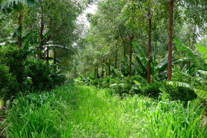 Agroforestry 4