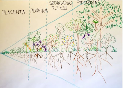 Agroforestry3